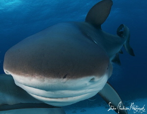 I wonder why I find scuff marks on my dome! This Reef Sha... by Steven Anderson