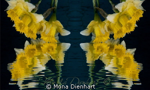 Narcissus and the mirror  a composing shot of the same ... by Mona Dienhart