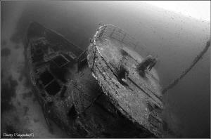 Emperial Eagle. 36 meters deep. by Dmitry Vinogradov