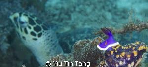 Nudi + Turtle by Yiu Tin Tang