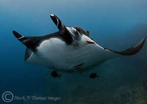Manta.