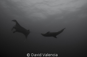 This bottlenose dolphin was creating quite a havoc on the... by David Valencia