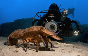 Slipper lobster and my dive buddy David by Roland Bach