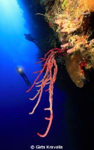 Reef scene by Girts Kravalis