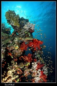 Red Sea scenery :-D by Daniel Strub