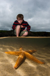 Common Starfish in a rock pool.  Shot using a single stro... by Paul Colley