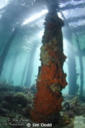 The view from under Rye Pier in Port Phillip Bay, Melbour... by Jim Dodd