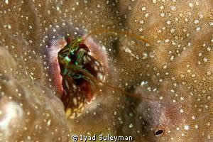 Coral Hermit Crab by Iyad Suleyman