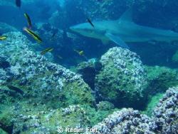 žralok by Radim Fort