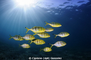golden hour, yellow friends and blue by Cipriano (ripli) Gonzalez