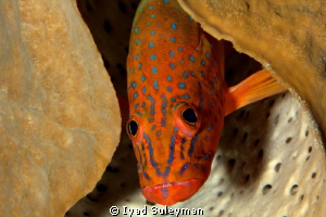 Fish portrait 