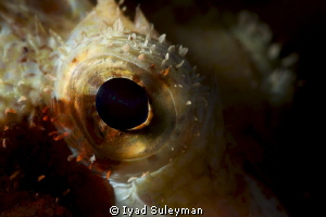 Fish eye close-up