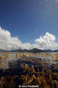 Sargassum and skyline by Arun Madisetti