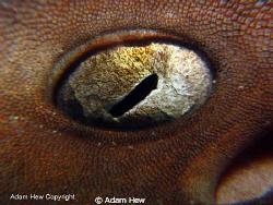 Wicked eye. by Adam Hew