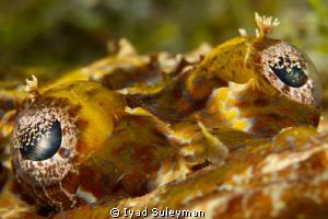 Eyes of crocodilefish by Iyad Suleyman