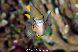 Fish portrait by Iyad Suleyman