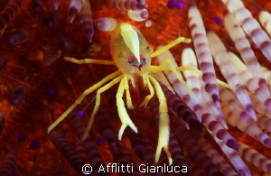 crab..no ..crop.. by Afflitti Gianluca