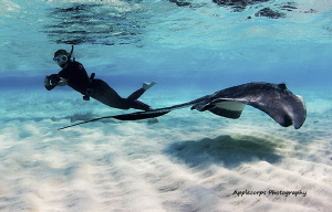 """The Stingray Dancer In Action!""  Underwater Ellen and th... by Richard Apple"