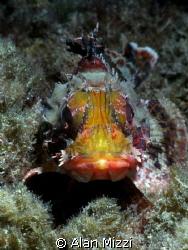 Scorpionfish by Alan Mizzi