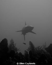 Hi
