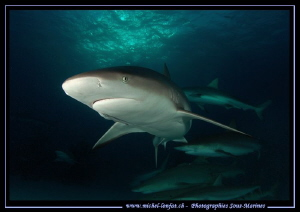 Reef Sharks.... :O)... by Michel Lonfat