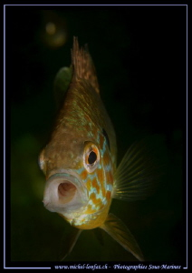 Face to face with a common sunfish... by Michel Lonfat
