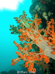 Soft Coral in Djibouti. Balise air France Spot by Marc Grau