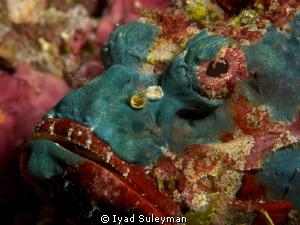 Scorpionfish by Iyad Suleyman