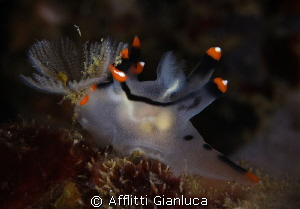 nudibranchia lunch by Afflitti Gianluca