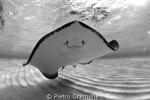 Smile! by Pietro Cremone