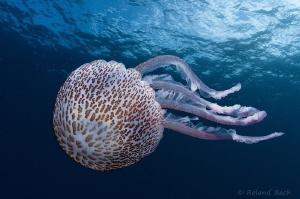 """ art of medusa "" taken with 10,5mm fisheye + 1,4x conv. by Roland Bach"