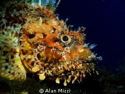 Nice Sized Scorpion Fish by Alan Mizzi