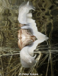 Snail diver:-) by Peter Sykora