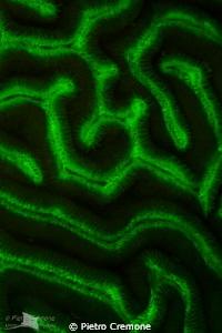 UV Maze by Pietro Cremone