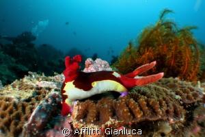 wide angle...macro     micro semi-fisheye by Afflitti Gianluca