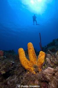 sponges,nikon d2x 12 mm by Puddu Massimo