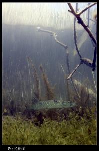 Wonderfull diving in a small pond :-D by Daniel Strub