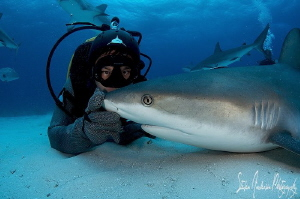 Making peace and quiet with this Reef Shark. All sharks n... by Steven Anderson