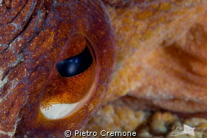 I'm watching you! by Pietro Cremone