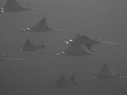 jet fighters. by Adam Hew