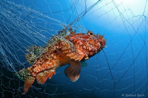 """""""SAD MOMENTS"""" Today I've seen a very long fishing net fi... by Roland Bach"""