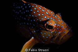 Panasonic GF1, Macro Leica 45mm, 10bar housing, YS120
