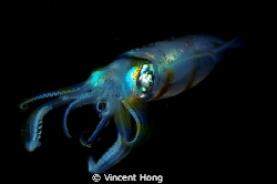 Night dive, macro 60mm , 2 strobes. by Vincent Hong