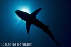the hooked black tip by Daniel Flormann