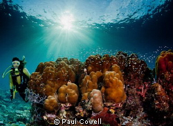 wide angle shot of hard and soft coral and a diver by Paul Cowell