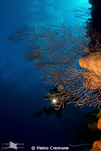 Seafan with diver by Pietro Cremone