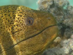 Moray eel, Aitutaki, Cook Islands.