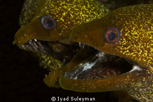 Lovely happy married couple Morey Eels by Iyad Suleyman