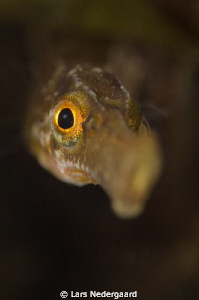 A very curious pipe fish shot while freediving