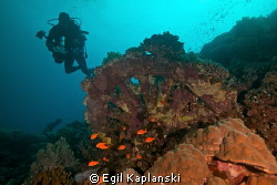 """Train wheels from the wreck of """"SS Numidia"""" by Egil Kaplanski"""